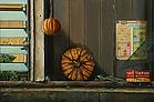 Still life with Pumkin.jpg